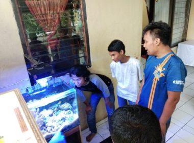Hobi memelihara ikan di akuarium.