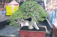 Persiapan Bantaeng EXPO Florikultura.