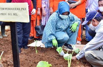 Penyediaan Eduwisata Hortikultura PKK SulSel.