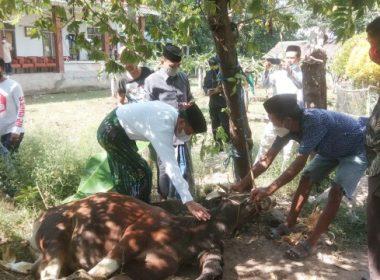 Hewan qurban Nurdin Abdullah untuk Bantaeng.
